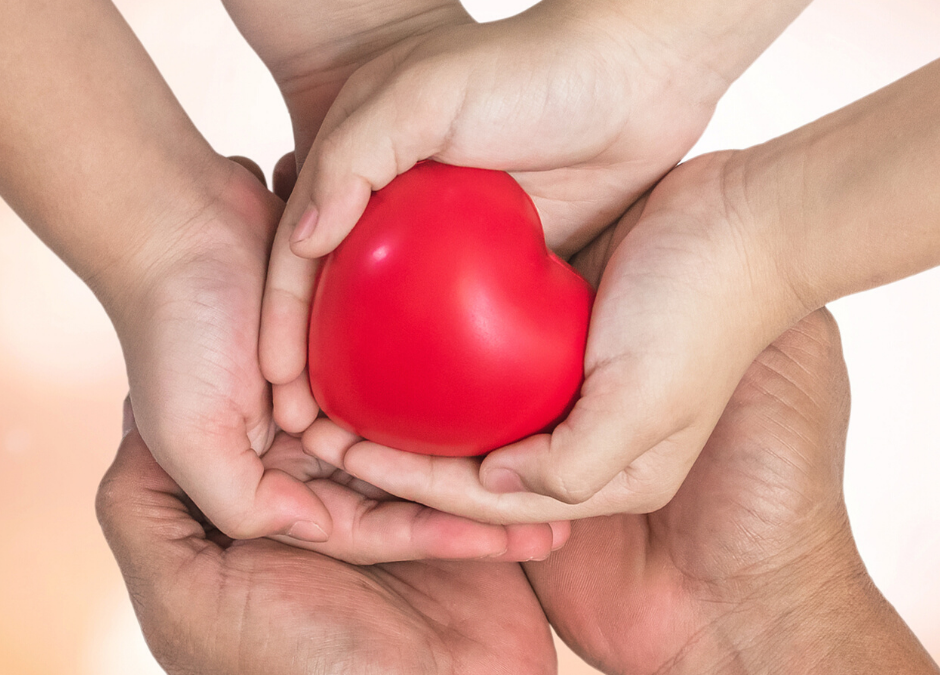 photo of hands holding a plastic model of a heart